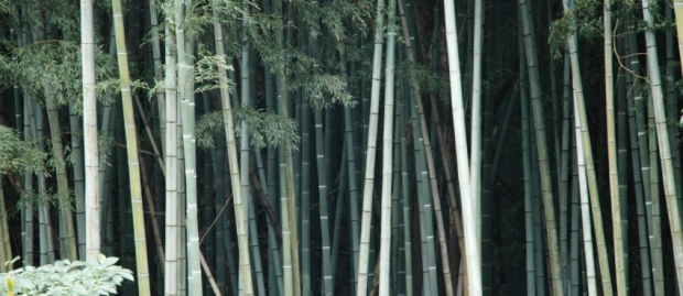 To the bamboo forest.